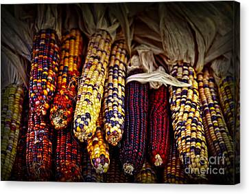 Indian Corn Canvas Print by Elena Elisseeva