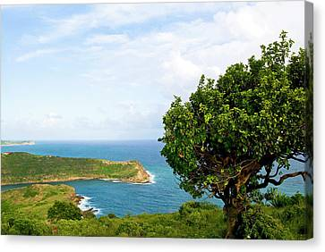 Indian Creek Point, Antigua, West Indies Canvas Print by Nico Tondini