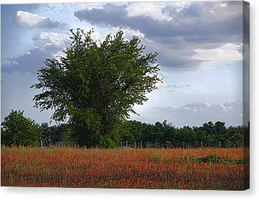Indian Paint Brush Revisited Canvas Print by Linda Phelps