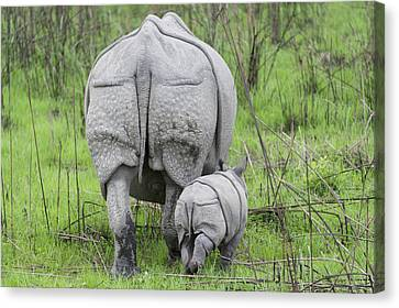 Indian Rhinoceros And Week Old Calf Canvas Print by Suzi Eszterhas