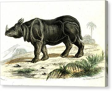 Indian Rhinoceros Canvas Print by Collection Abecasis