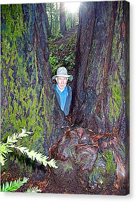 Indiana Jones In Armstrong Redwoods State Preserve Near Guerneville-ca Canvas Print by Ruth Hager