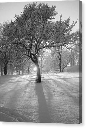 Infra Red Sun Snow And Shadows Canvas Print by Online Presents