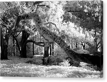 Infrared Surreal Gothic South Carolina Trees Landscape Canvas Print by Kathy Fornal