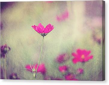 Ingrid's Garden Canvas Print by Amy Tyler