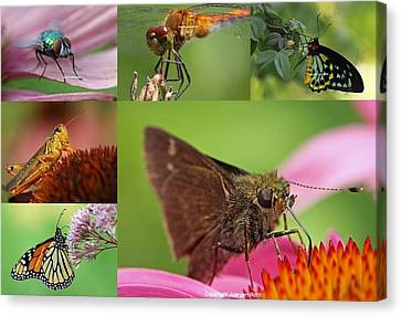 Insect Macro Photography Art Canvas Print by Juergen Roth