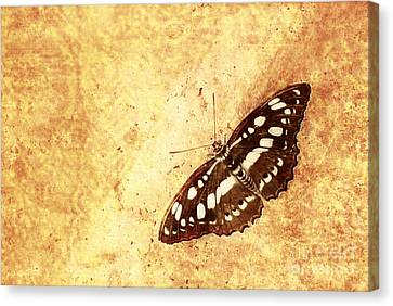 Insect Study Number 66 Canvas Print by Floyd Menezes