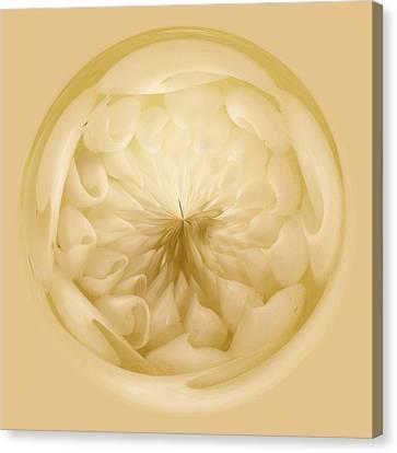 Inside A Sea Shell Orb Canvas Print by Paulette Thomas