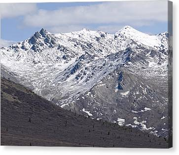 Inside Denali National Park 2 Canvas Print by Tara Lynn