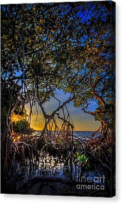 Inside Looking Out Canvas Print by Marvin Spates