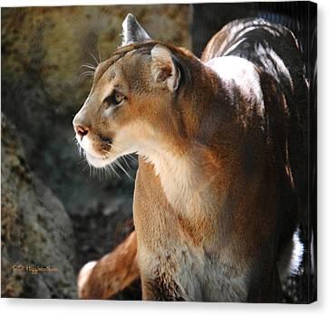 Intense Mountain Lion Canvas Print by DiDi Higginbotham