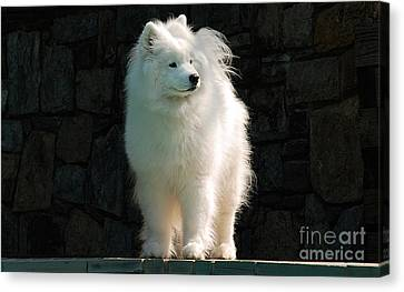 Intent Canvas Print by Lois Bryan