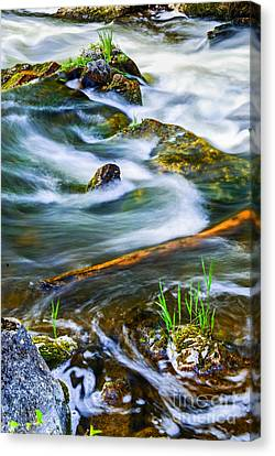 Intimate With River Canvas Print by Elena Elisseeva