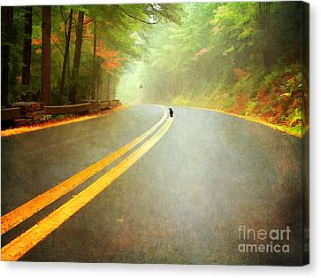 Into The Fog Canvas Print by Darren Fisher