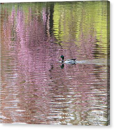 Into The Pink Canvas Print by Karin Ubeleis-Jones