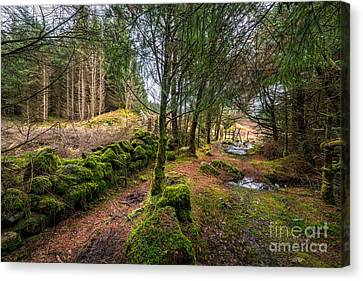 Into The Woods Canvas Print by Adrian Evans