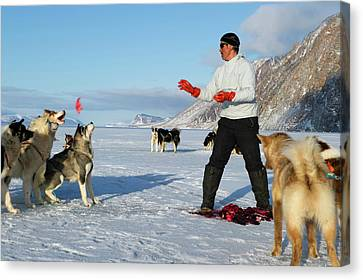 Inuit Hunter Feeding Walrus Meat To Dogs Canvas Print by Louise Murray