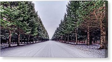 Invitation From The Pines Canvas Print by Everet Regal