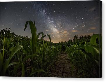 Iowa Corn Canvas Print by Aaron J Groen