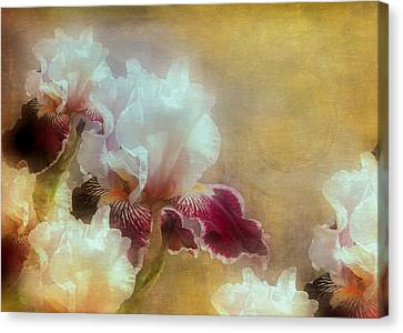 Iris At Hoods Canal Canvas Print by Jeff Burgess