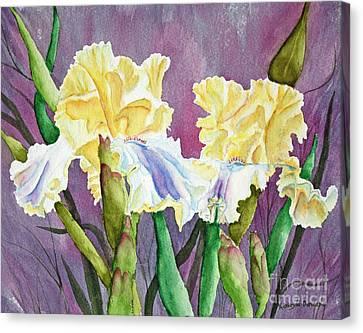 Iris Cream Duo Canvas Print by Kathryn Duncan