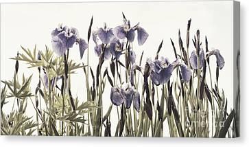 Iris In The Park Canvas Print by Priska Wettstein