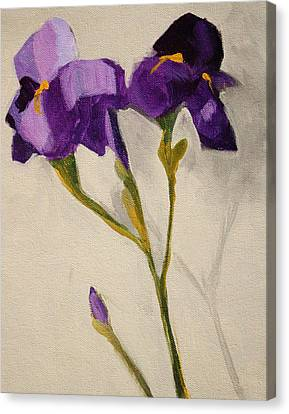 Iris Canvas Print by Nancy Merkle