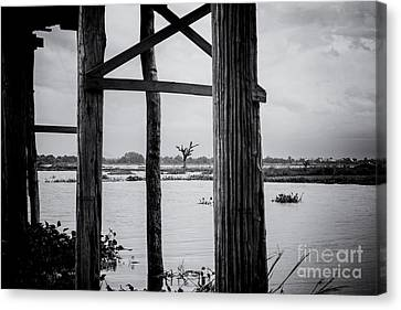Irrawaddy River Tree Canvas Print by Dean Harte