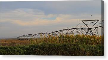 Irrigation On The Farm Canvas Print by Dan Sproul