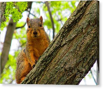 Is It Alright To Have Some Acorns ? Canvas Print by Tina M Wenger