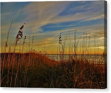 Island Morning Glory 5 10/20 Canvas Print by Mark Lemmon