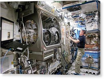 Iss Astronaut In A Laboratory Canvas Print by Nasa