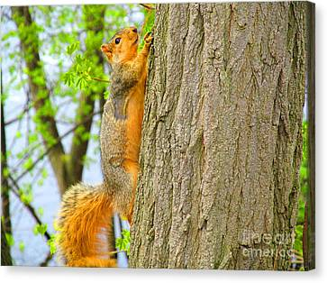 It Is Hard Work Getting To The Top Canvas Print by Tina M Wenger