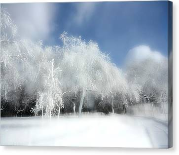 It Snowed Last Night Canvas Print by Gothicolors Donna