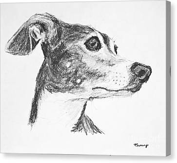 Italian Greyhound Sketch In Profile Canvas Print by Kate Sumners