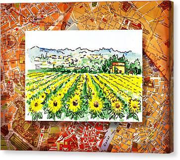 Italy Sketches Sunflowers Of Tuscany Canvas Print by Irina Sztukowski