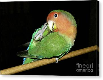 Itchy Pickle Canvas Print by Terri Waters