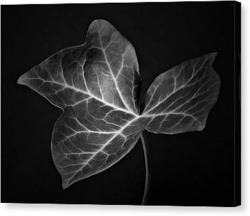 Black And White Flowers Macro Photography Art Work Canvas Print by Artecco Fine Art Photography