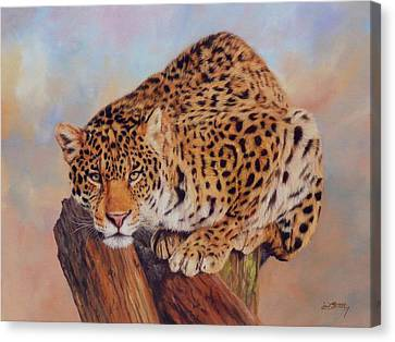 Jaguar Canvas Print by David Stribbling