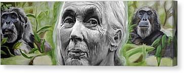 Jane Goodall Canvas Print by Simon Kregar