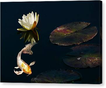 Japanese Koi Fish And Water Lily Flower Canvas Print by Jennie Marie Schell