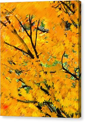 Japanese Maple Leaves Blowing In Wind Canvas Print by Robert Jensen