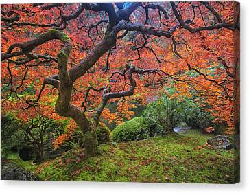 Japanese Maple Tree Canvas Print by Mark Kiver