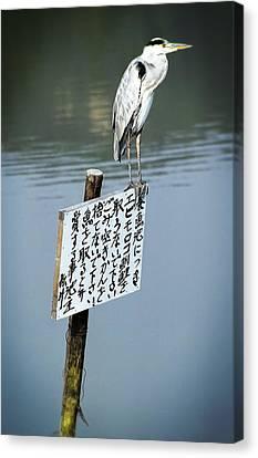 Japanese Waterfowl - Kyoto Japan Canvas Print by Daniel Hagerman