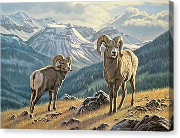 Jasper Rams Canvas Print by Paul Krapf