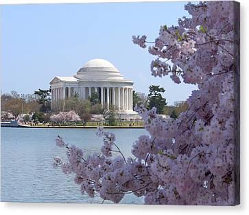 Jefferson Memorial - Cherry Blossoms Canvas Print by Mike McGlothlen