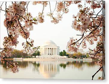 Jefferson Memorial With Reflection And Cherry Blossoms Canvas Print by Susan Schmitz