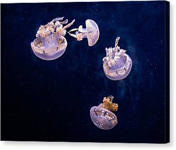 Jellyfish Canvas Print by Steve Harrington