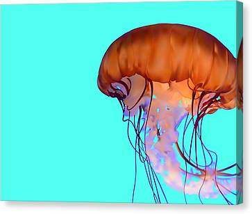 Jellyfish Canvas Print by Tanias Reign