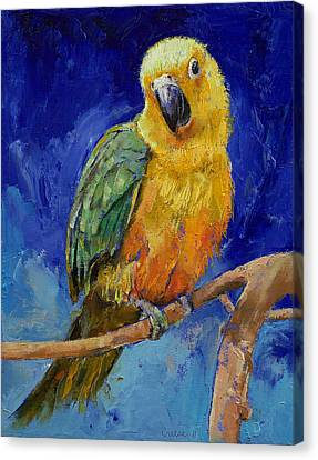 Jenday Conure Canvas Print by Michael Creese